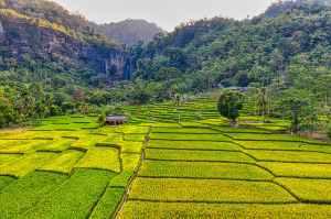 rice field terraces