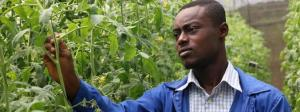 youth_lead_africa_agribusiness